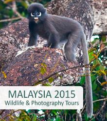 Wildlife Tour Malaysia