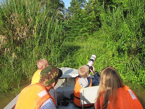 Budding young photographer tracking a wild Orangutan