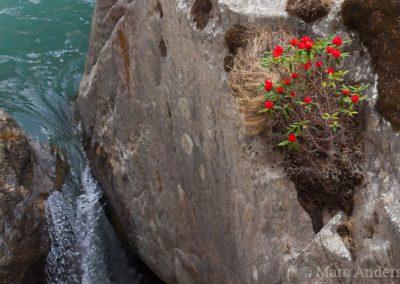 Stream & Rhododendron