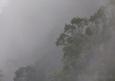 Misty forest in Sinharaja
