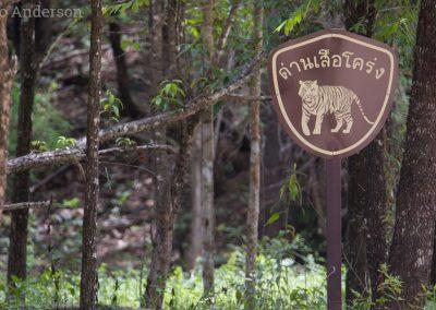 Tiger sign in Huai Kha Khaeng