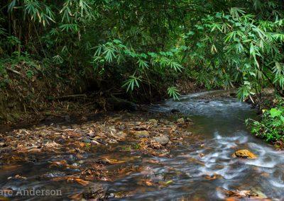 Stream in Kaeng Krachan