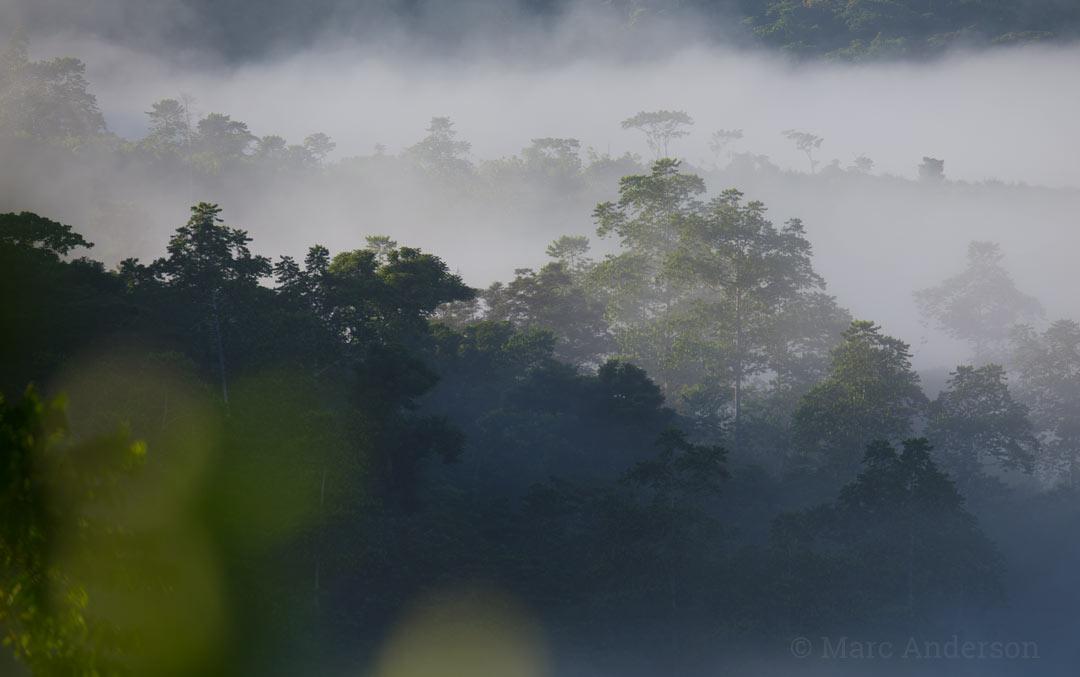 Fiji - Rainforest habitat