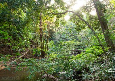 Iron Range Rainforest