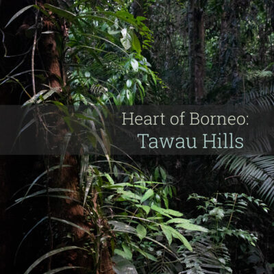 Heart of Borneo - Tawau Hills - Album Cover