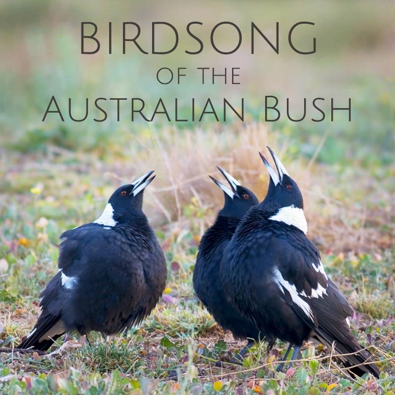Birdsong of the Australian Bush - Album Cover
